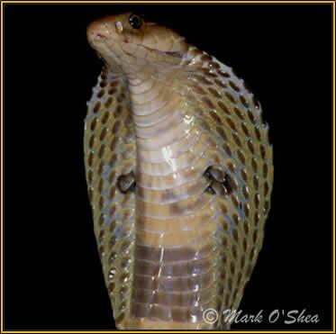 Hermosas y letales: Serpientes